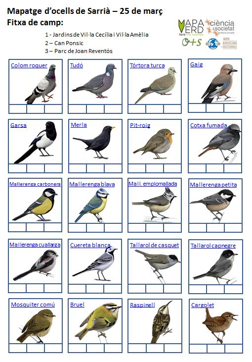 Ocells de Sarrià_1