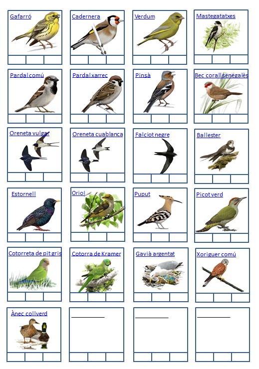 Ocells de Sarrià_2