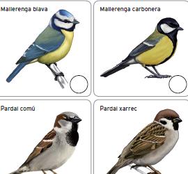 Ocells de jardí